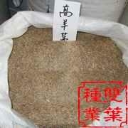 苇状羊茅种子