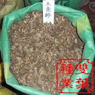 病虫害防治:三角枫的主要病害有褐斑病