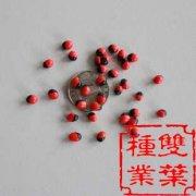 孔雀豆种子