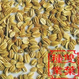 蛇床子种子